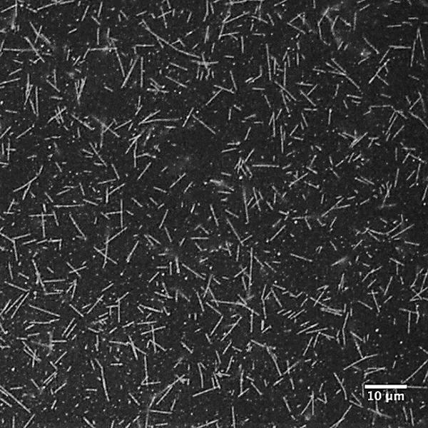 Biotin-XX GMPCPP