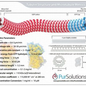 Team Tubulin Infographic Magnet