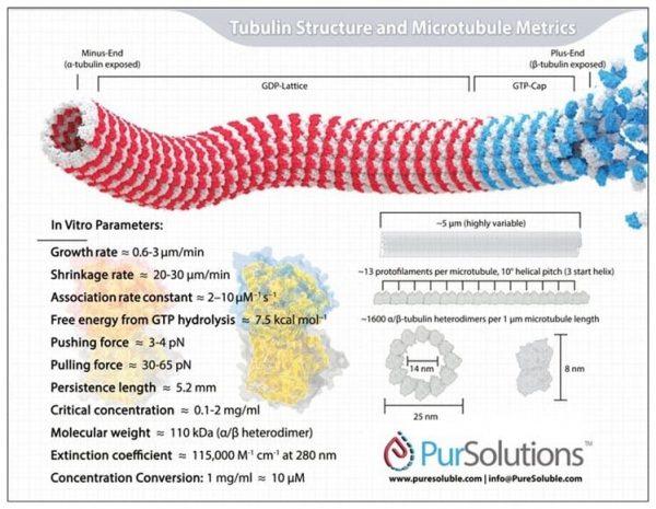 Team Tubulin Infographic Magnet