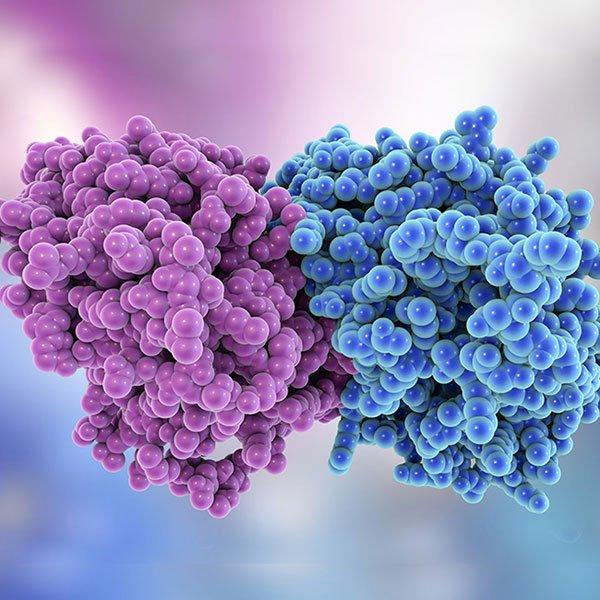 Lyophilized Tubulin - Product