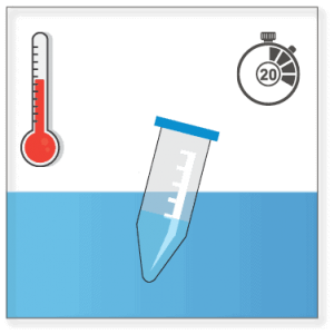 Induce polymerization by incubating the polymerization mix in a 37°C water bath for 20 minutes.