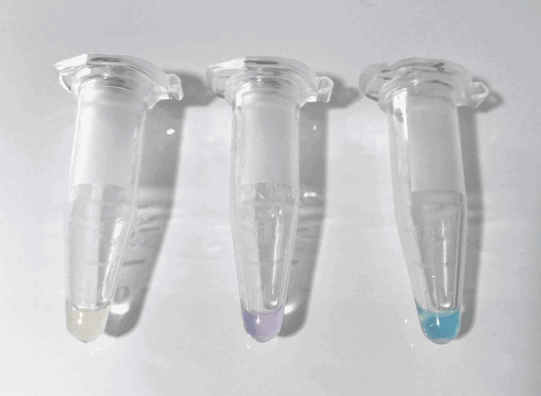 tubulin protein polymerization mix