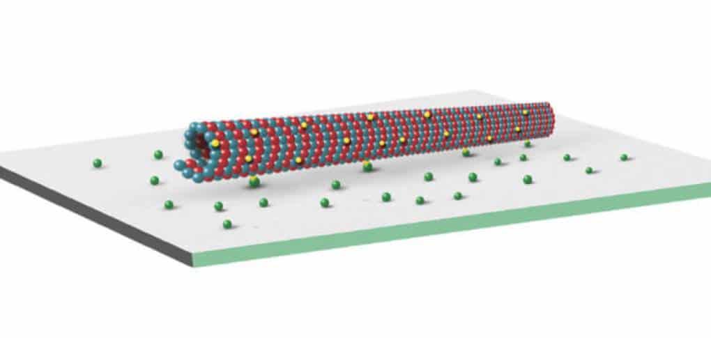 Biotinylated Microtubule