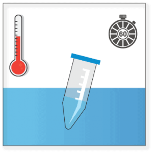 Induce polymerization by incubating the polymerization mix in a 37°C water bath for 1 hour.