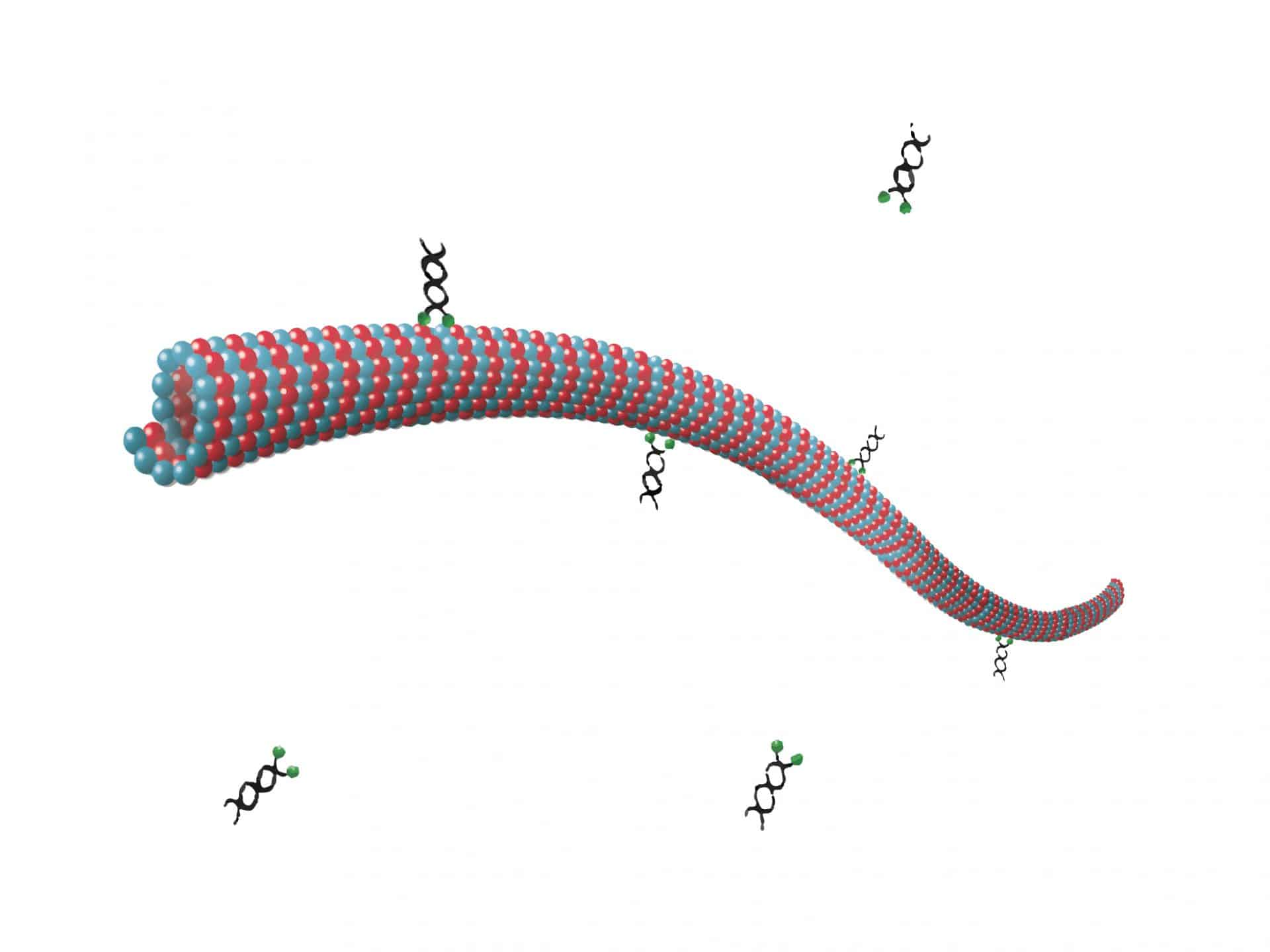 Microtubule co-pelleting assay graphical abstract