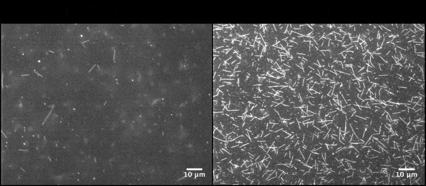 Biotin-XX Tubulin Streptavidin Coverslip