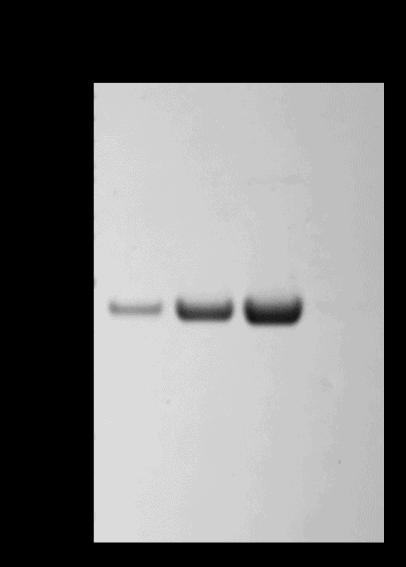 Ultra Pure Actin Polymerization